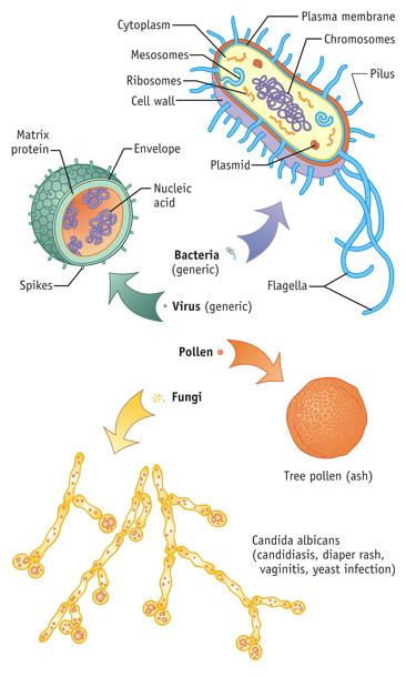 Bacteria, Fungus, Virus, etc. Medical Illustration